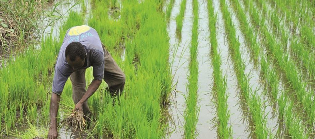 L'agriculture écologique et biologique étend des tentacules au Bénin.