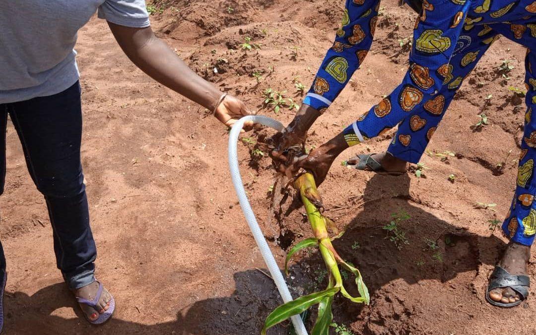 Agriculture Biologique et Écologique : Animation de champ école au niveau de la CVA banane et plantain.